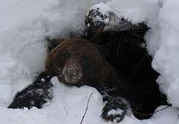 рассказ про охоту на медведя